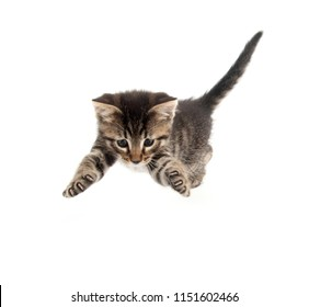 Cute baby tabby kitten pouncing and jumping isolated on white background
