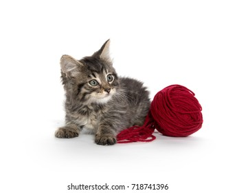 Cute baby tabby kitten with red ball of yarn isolated on white background