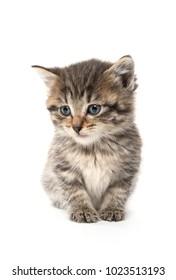Cute baby tabby kitten sitting on white background
