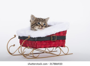 Cute baby tabby kitten sitting inside of red sled isolated on white background