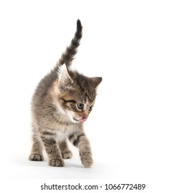 Cute baby tabby kitten standing isolated on white