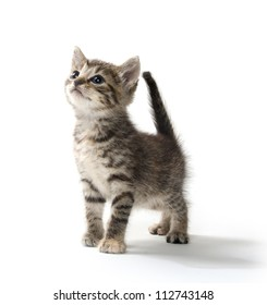 Cute baby tabby kitten standing on white background