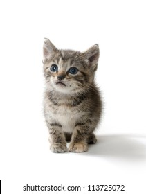 Cute baby tabby kitten standing on white background