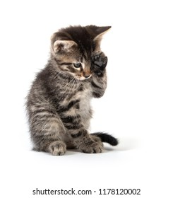 Cute baby tabby kitten wiping its eye with its paw isolated on white background