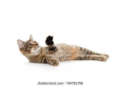 Cute baby tabby laying down isolated on white background