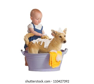 Cute baby washing yellow dog, jack russel terrier - isolated on white