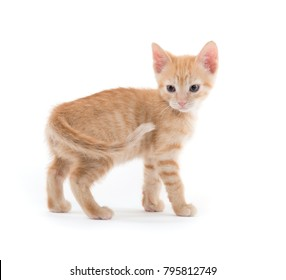 Cute baby yellow tabby kitten isolated on white background