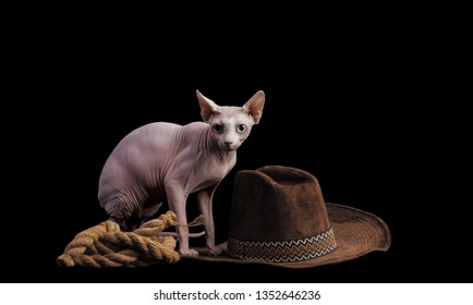 cute bald cat sphinx. Isolated on a black background. in the image of a cowboy.