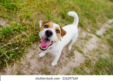 Cute barking dog in field