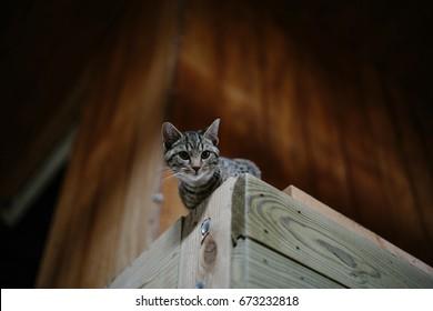 Cute Barn Cat