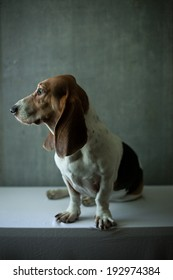 Cute basset hound sitting next to window on white table