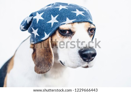 https://image.shutterstock.com/image-photo/cute-beagle-blue-hat-stars-450w-1229666443.jpg