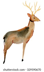 Cute beautiful deer isolated, watercolor painting on white background