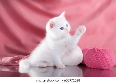 Cute beautiful gentle kitten on a pink background. Happy cat