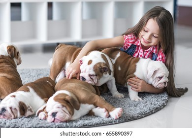 Cute beautiful little girl playing with puppies of English bulldog