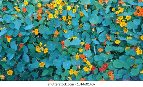 cute and beautiful small multicolored flower leaves