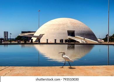 a cute bird taking a walk in Brasilia