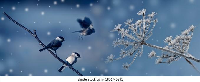 cute birds in winter time