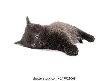 Cute black American shorthair kitten laying down on white background