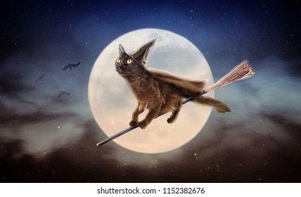 Cute black cat dressed as Halloween witch flying on broom in night sky in front of full moon