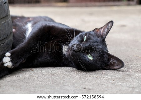 Cute Black Cat Green Eyes Stretching Stock Photo Edit Now