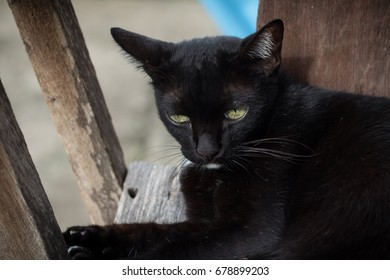 Cute black cat in the lazy time