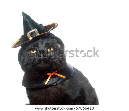 e37d26f2 Cute Black Cat Witch Hat On Stock Photo (Edit Now) 67866418 ...