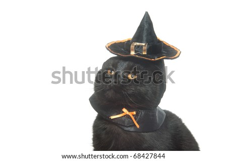 05504022 Cute Black Cat Witch Hat On Stock Photo (Edit Now) 68427844 ...