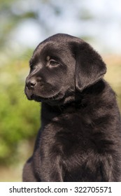 Cute black dog puppy looking