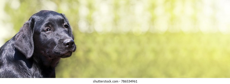 Cute black dog puppy looking at the camera - web banner with copy space