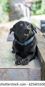 cute black dog sitting on the floor.
