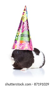 Cute black guinea pig wearing a party hat
