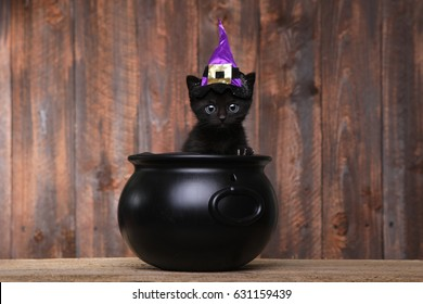 Cute Black Halloween Witch Cat