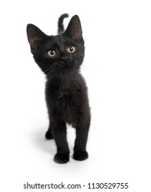Cute black kitten looking at camera isolated on white background