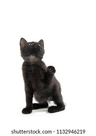 Cute black kitten looking up and raising its paw isolated on white background