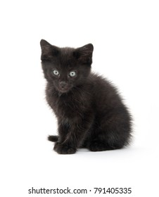 Cute black kitten playing isolated on white background
