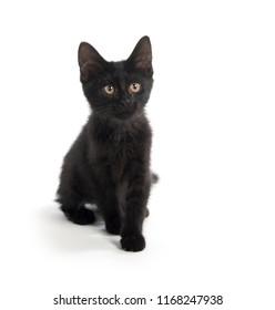Cute black kitten sitting isolated on white background