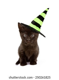 A cute black kitten wearing a green and black Halloween witch hat