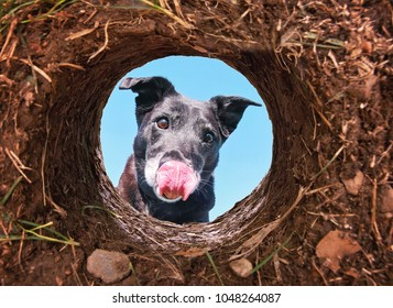 cute black lab looking into a hole in dirt licking her face with blue sky above