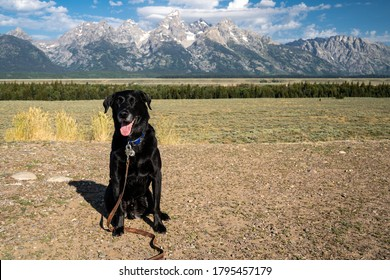 Cute black labrador retriever dog sits and poses in front of the Grand Teton National Park in Wyoming