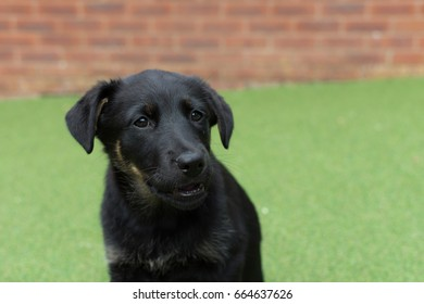 cute black puppy dog looking like shes smiling in the back garden