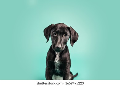 Cute Black Puppy on Colored Background