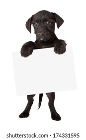 Cute black puppy standing up and holding a blank sign