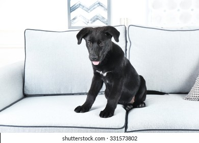Cute black retriever sitting on white sofa in the room