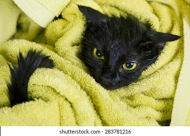 Angry Black Cat Images Stock Photos Amp Vectors Shutterstock