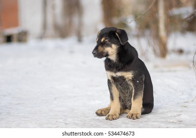 Cute black stray puppy drowsing while sitting outdoor on a winter snow