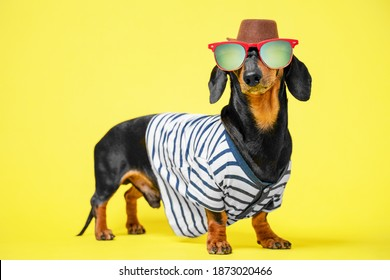 Cute black and tan dachshund dressed in summer costume, sunglasses, hat and striped t-shirt, standing on bright yellow illuminating background, vacation and adventure advertising.