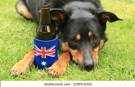 Cute black and tan Kelpie (Australian breed of sheep dog) lying on grass with a beer bottle in a stubbie holder decorated with the Australian flag.