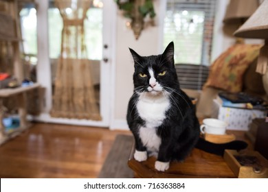 A cute black and white cat gives a funny expression, as if he is very annoyed at his owner. He sits on an end table indoors, in a southern style home.