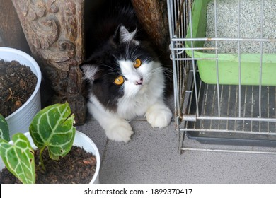 Cute Black and White Cat Hiding Bellow Wood at Terrace